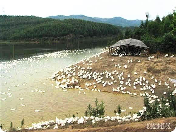 柳州周边游:古木坳山林徒步记