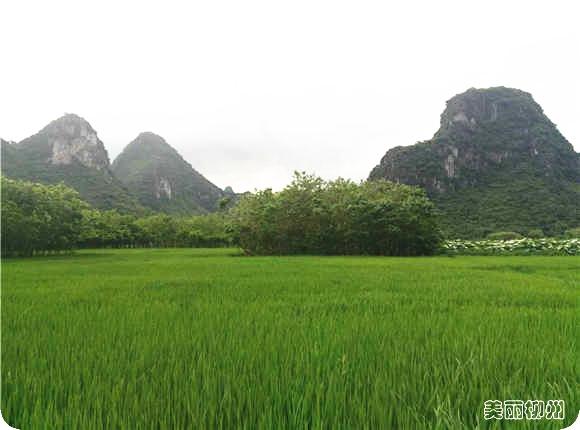 柳州周边游:美丽六兰休闲徒步