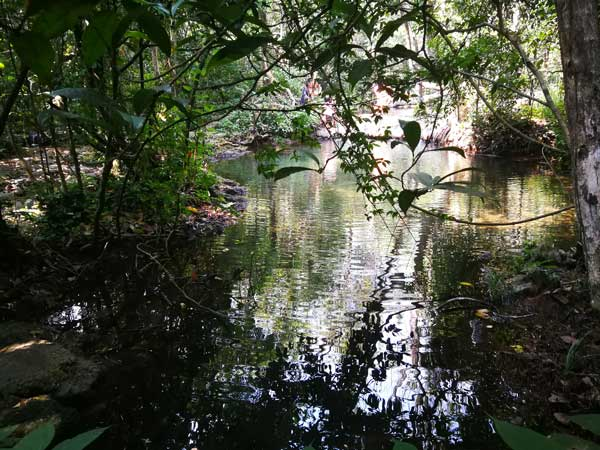 柳州周边游:漫步在天然水上森林